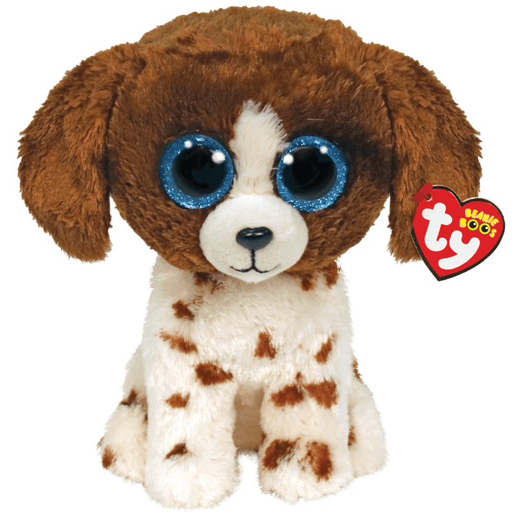 Muddles - Brown And White Dog