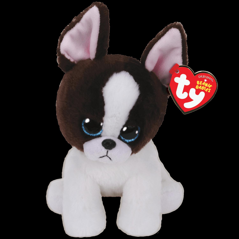 Portia - Black And White Terrier